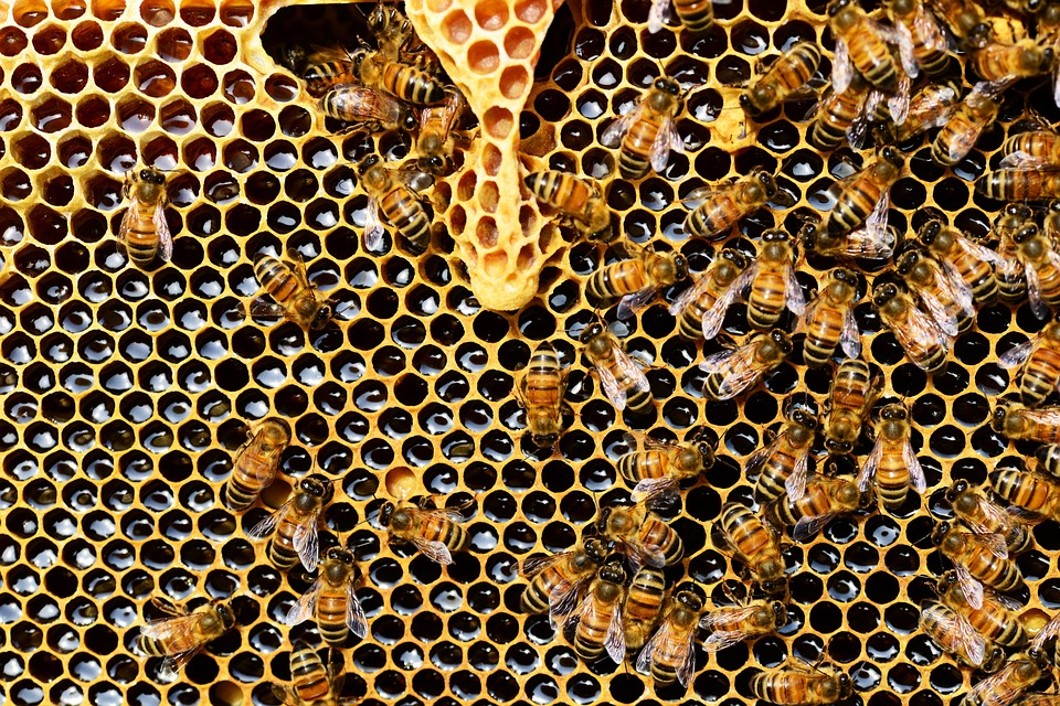 Which Bees Sting And Which Don't – Know Your Bees! | The ...