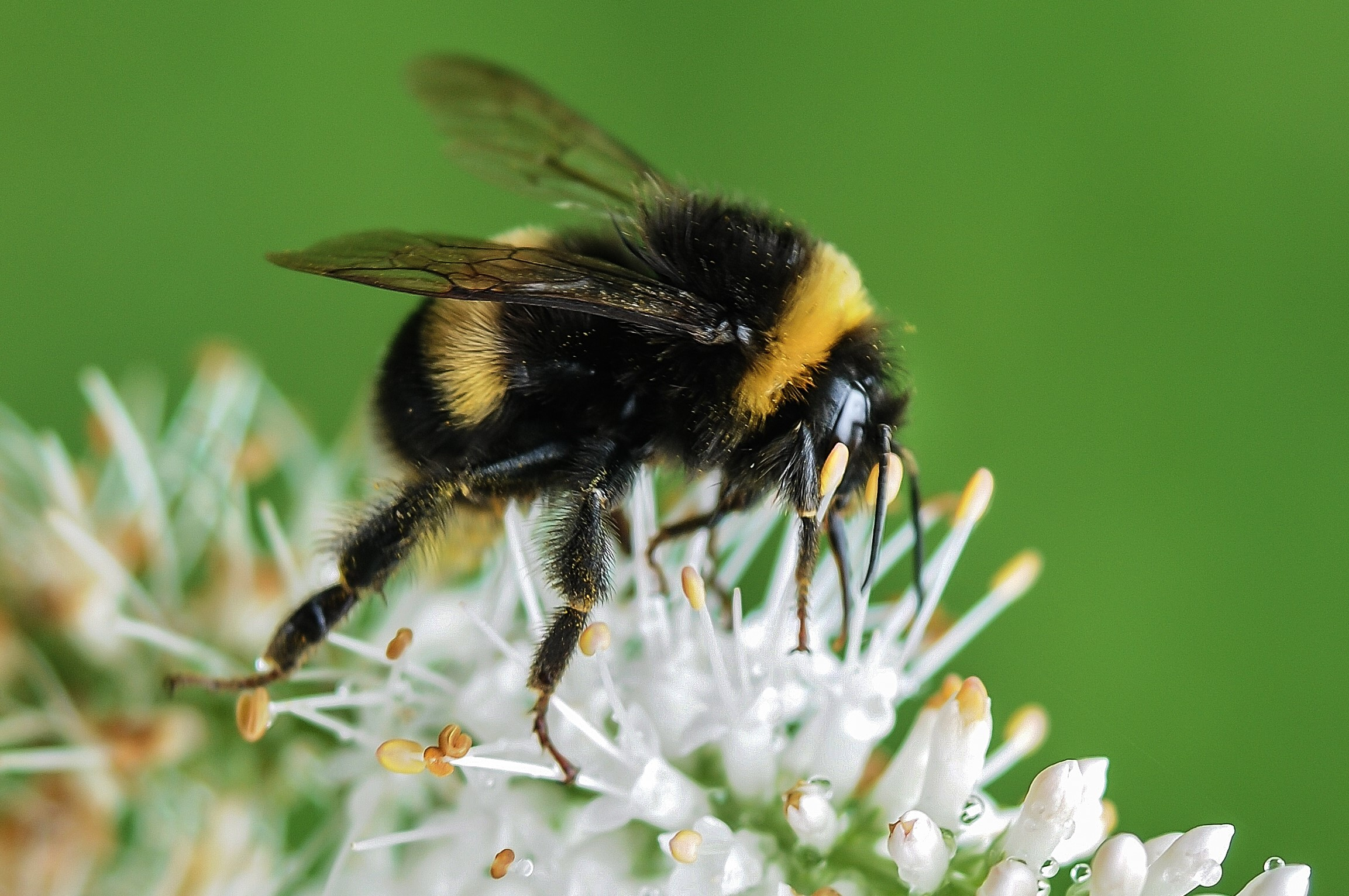 which bees sting and which don u0027t u2013 know your bees the digest