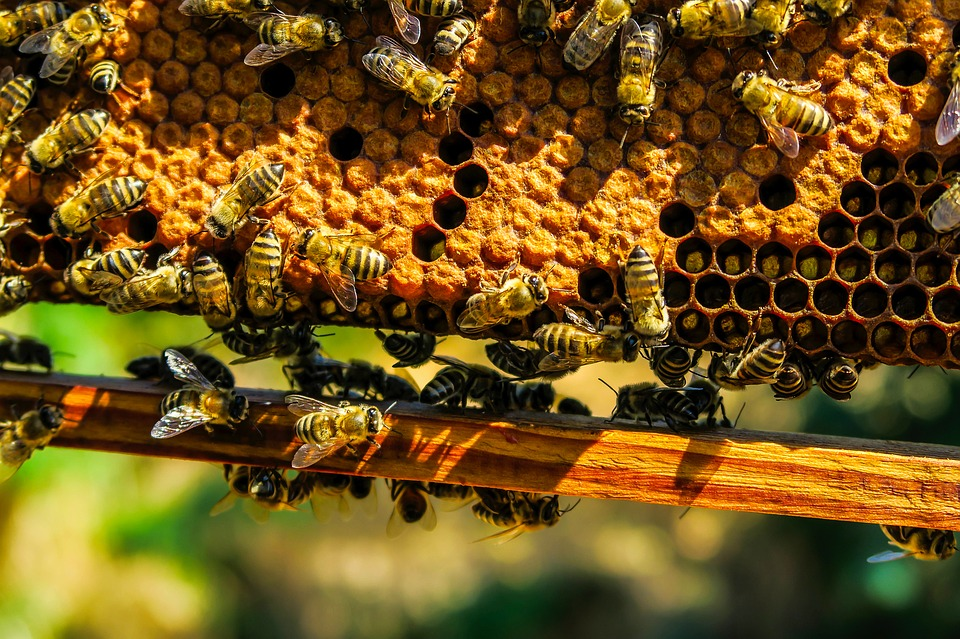 Need to get rid of bees? Hammer and Mop shares effective pest control methods to get rid of a beehive without killing them.
